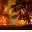 ایلنا: با آغاز فصل گرما بیم آن میرود که آتشسوزی در جنگلها افزایش یابد، این در حالی است که هنوز تابستان از راه نرسیده، تنها در ۳ ماهه نخست سال […]