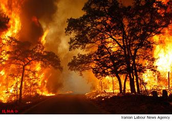 افزایش 50 درصدی آتشسوزی جنگلها/ احیای جنگلهای گلستان 500 سال طول میکشد