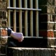 اعلام خبر اعدام زندانیان عقیدتی بروش شایعه بازی با جان انسانها در حکومتهای جهان چندان عجیب نیست. اما در رژیم اسلامی از آغاز تاکنون یک سنگدلی و جنایت پیشگی را […]