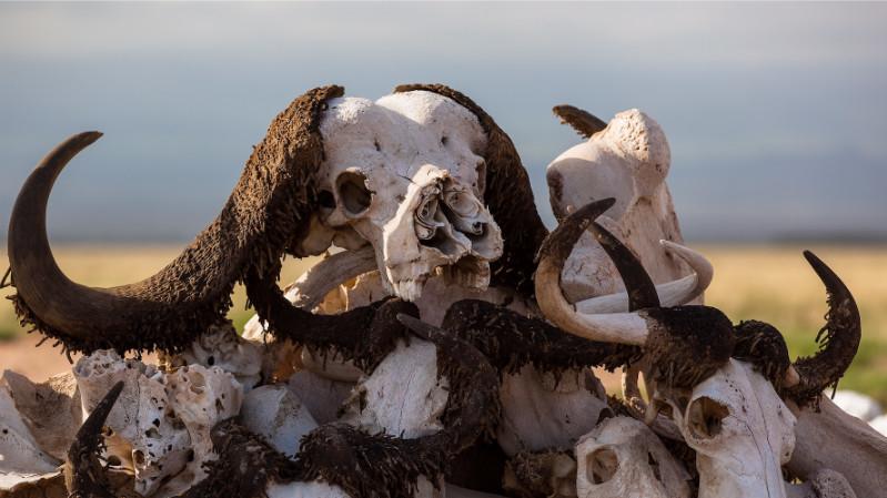 ششمین انقراض بزرگ جانوران و نقش انسان