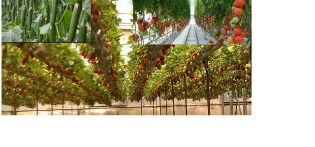 """کشور """"هلند"""" توانست به کمک تکنولوژی و علم با کاهش ۹۰ درصدی آب دومین صادر کننده مواد خوراکی در جهان شود. این در حالیست که ویژگی و مساحت کشور هلند […]"""